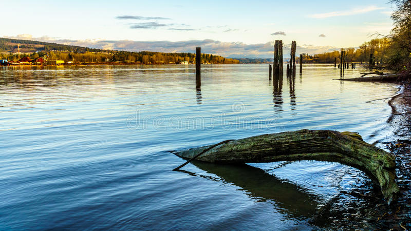 View of the town of Maple Ridge along the Fraser River, BC, Canada. A scenic veiw of the town of Maple Ridge across the Fraser River from the historic village of stock image
