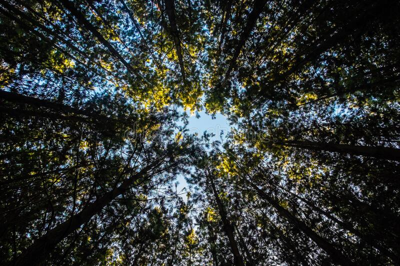 View of Tree Canopy stock image