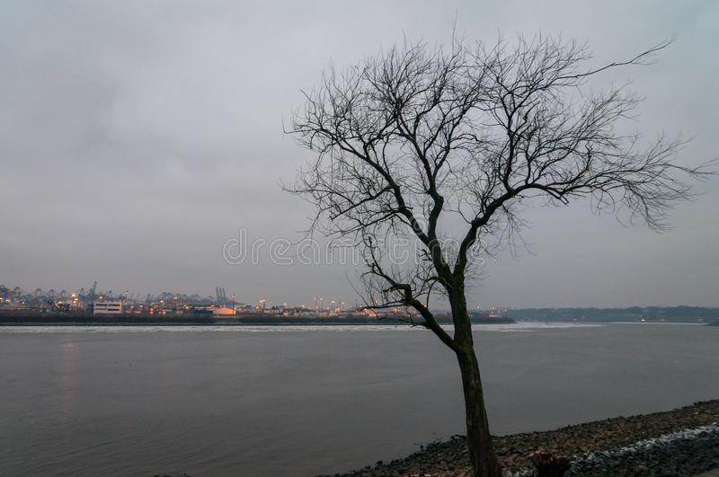 View at tree without leafs in winter at Koehlbranddeich in Hamburg, Germany, viewing at Koehlbrand. royalty free stock photo