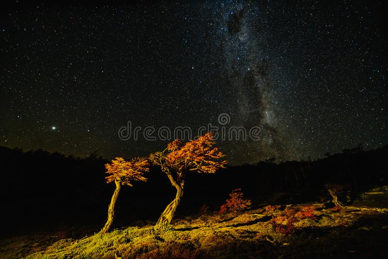 View of the tree and the Milky Way in the national park Los Glaciares at night. Autumn in Patagonia, the Argentine side.  stock image