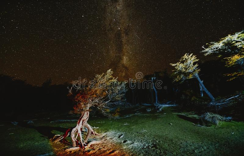 View of the tree and the Milky Way in the national park Los Glaciares at night. Autumn in Patagonia, the Argentine side.  royalty free stock image
