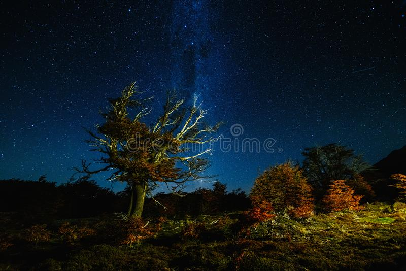 View of the tree and the Milky Way in the national park Los Glaciares at night. Autumn in Patagonia, the Argentine side.  royalty free stock photos