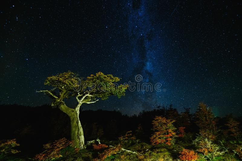 View of the tree and the Milky Way in the national park Los Glaciares at night. Autumn in Patagonia, the Argentine side.  stock images