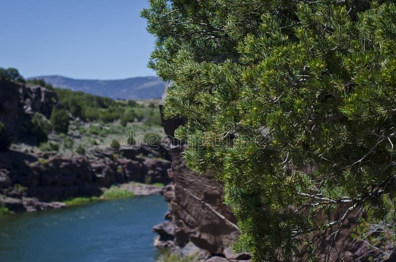 The trees above the green river. A view of the trees above mighty green river flowing into the red rock canyon of the browns park landscape stock image