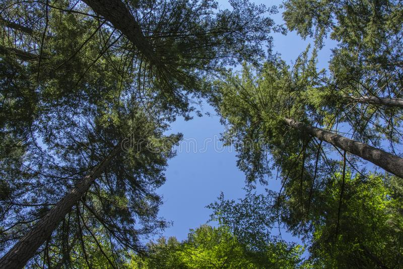 View of a Treetop Canopy stock photography