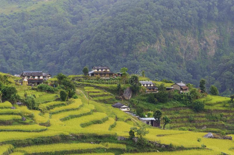 Terraces, rice fields and villages in Himalayas. View on trekking of terraces, rice fields and villages in Himalayas, Nepal royalty free stock images