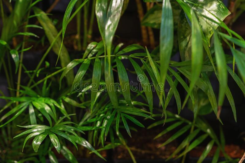 View of tropical green palm leaves. Nature summer concept.  stock photos