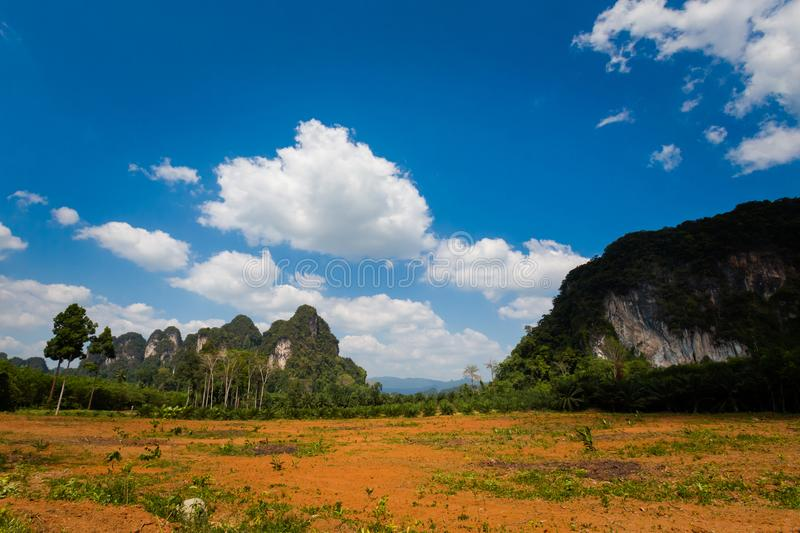 Oil palm plantation in Krabi royalty free stock photography