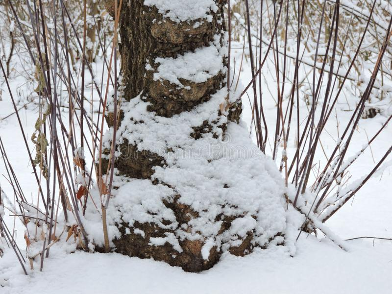 View of  trunk of tree in white snow stock images