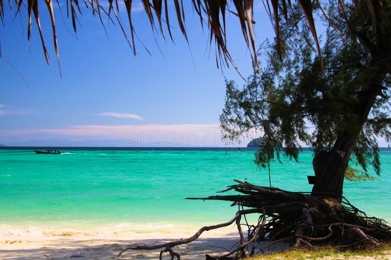 View on turquoise water with crooked tree root and white sand beach on Ko Lipe, Thailand royalty free stock photos