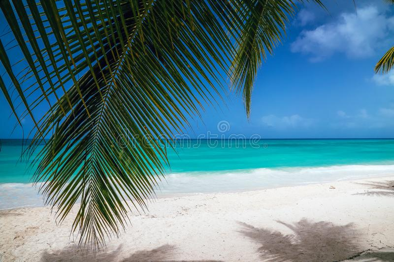 View of the turquoise water through the leaves of palm trees. stock photo