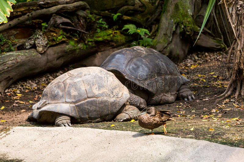 View of two turtles in a zoo royalty free stock photo