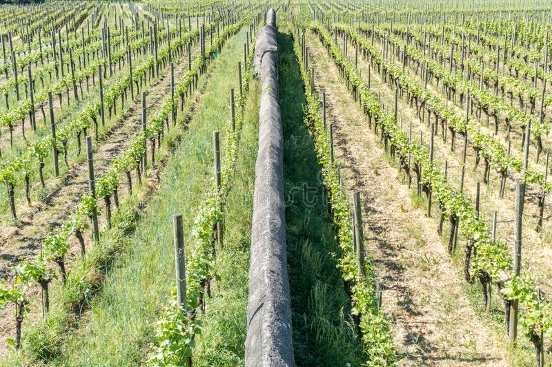 Two vineyards with endless rows of vines separated by a long rock wall stock photos