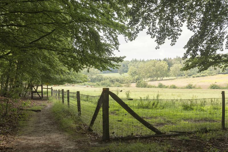 A view from an unpaved path to meadows with cattle royalty free stock image