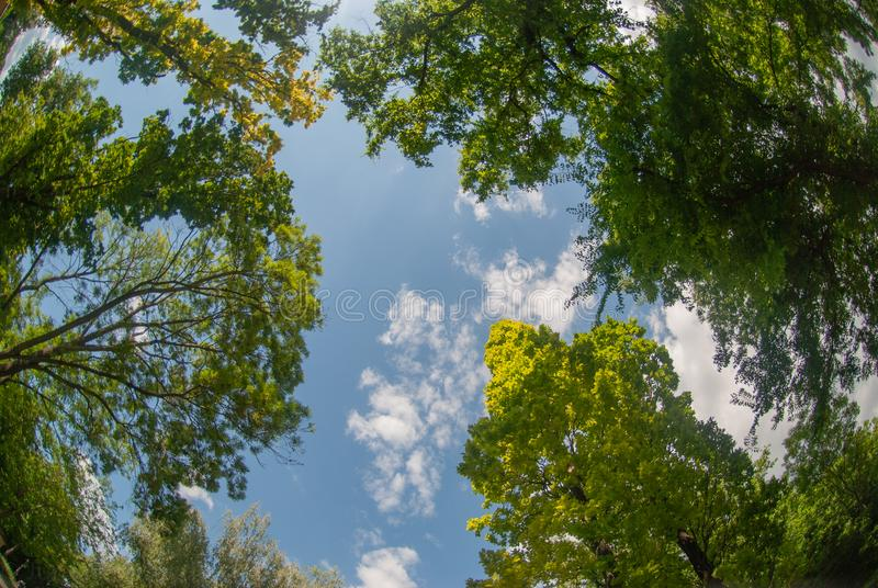 View up in the sky with trees above stock images