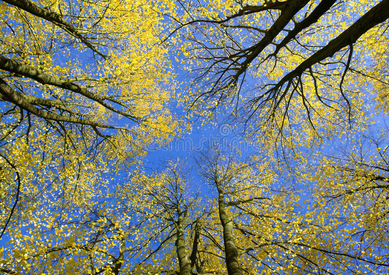 Download View Upwards In Autumn Forest Stock Image - Image: 11640179