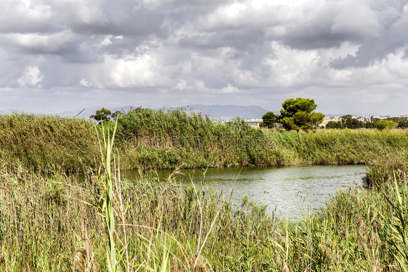 view of vegetation in the river in a clouded day.Spain.Alicante,Guardamar del Segura stock photos