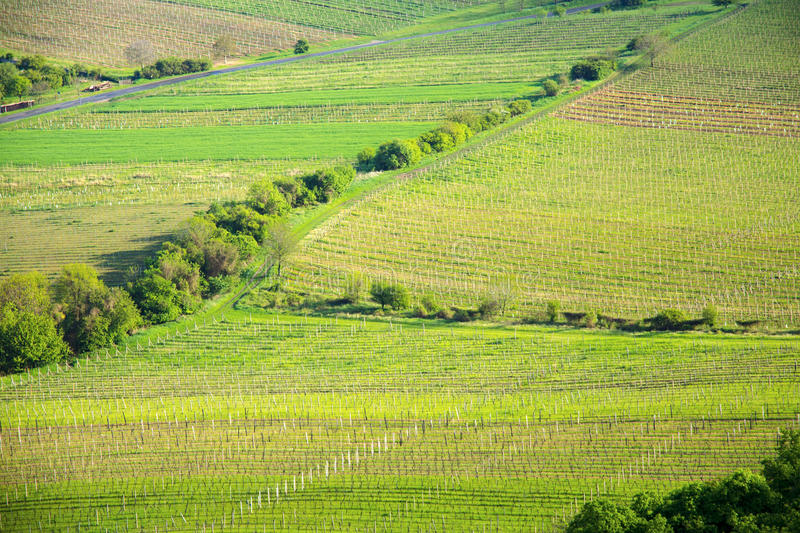 View of a vineyard in the Palava region of South Moravia. On a sunny spring day stock photos