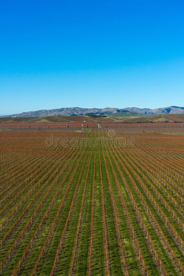 View of the vineyards in the Marlborough region royalty free stock photography