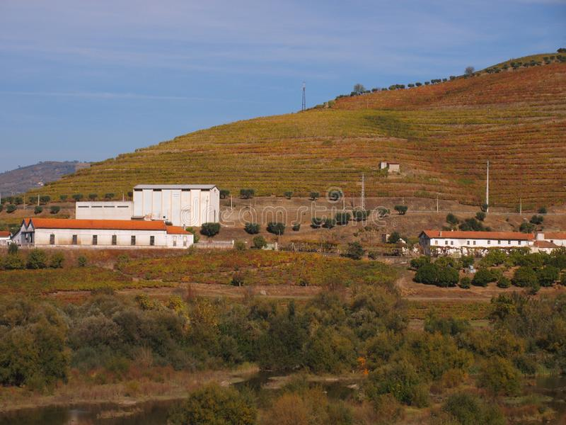 Douro river tipicalwine caves Portugal. View on vineyards meadows,wine caves and traditional houses royalty free stock photos