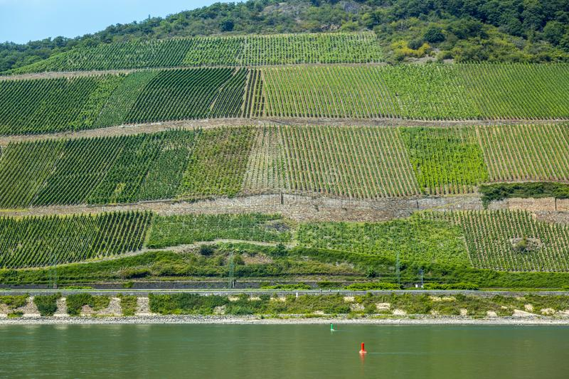 View of the vineyards in the Rhine Valley in Germany stock images