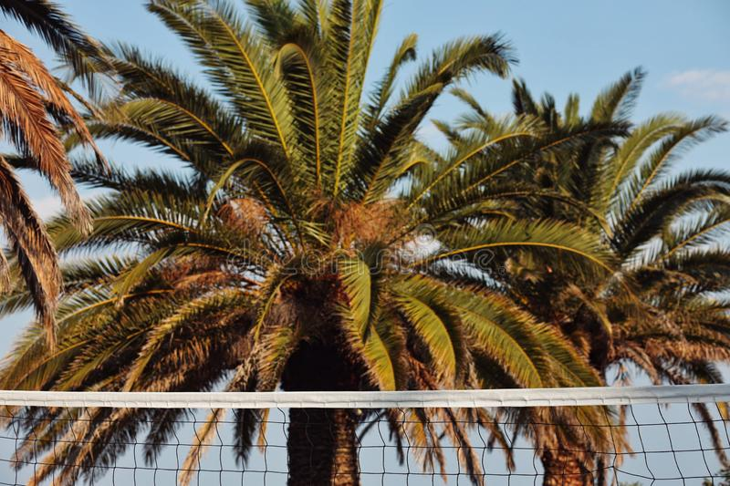 View of the volleyball net and palm trees in the background. Travel, vacation, tourism, relaxation, idyllic, tropical, natural, nature, recreation, sport stock photos