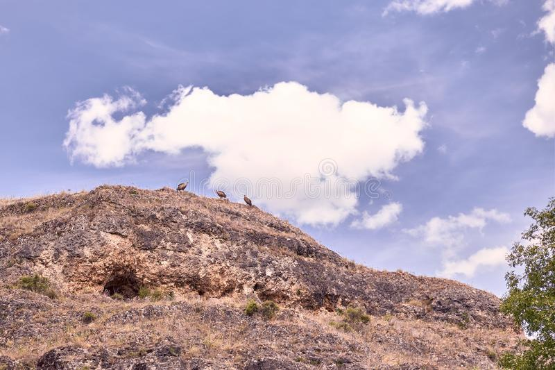View of vultures on top of a meander. View of watchful vultures atop a meander on a day with clouds stock photography