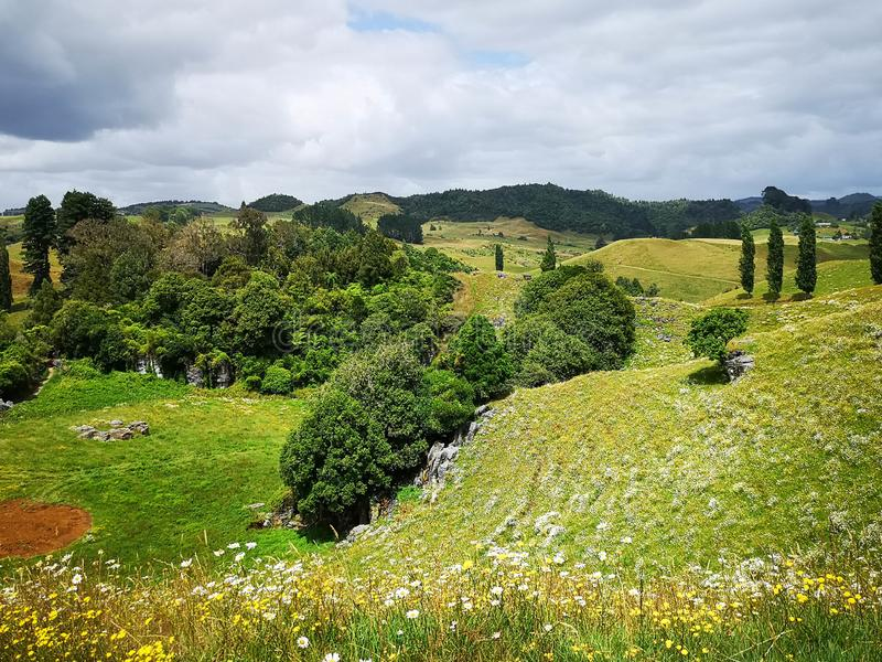 View of Waitomo valley in summer bush walk stock photos