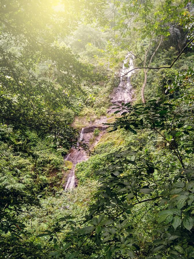 The view of the waterfall behind the trees royalty free stock photo