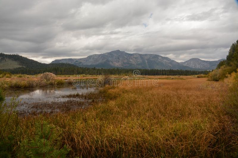 Wetland Area Near Lake Tahoe. A view of a wetland area on the California side of Lake Tahoe royalty free stock images