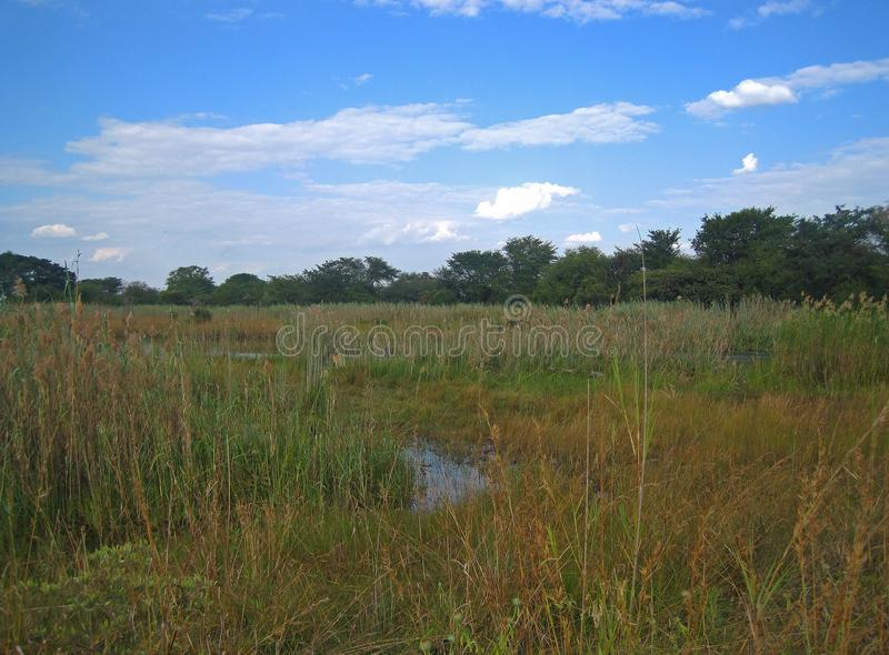 WETLAND AREA IN CAPRIVI STRIP, NAMIBIA. View of wetland area depicting long green grass and a distant treeline against a blue sky with white clouds stock photos