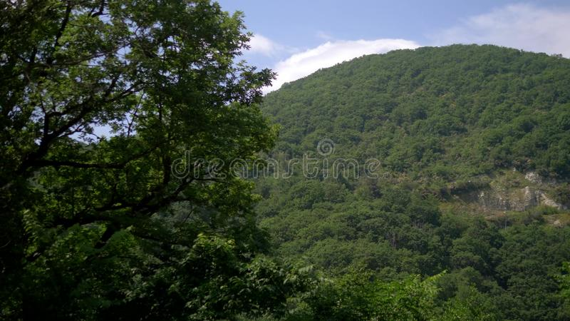 View from the window of a passing car, driving past a forest and a mountain range.  royalty free stock image