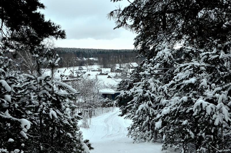 View from the winter forest, through the snow-covered branches of fir trees on the houses stock photo