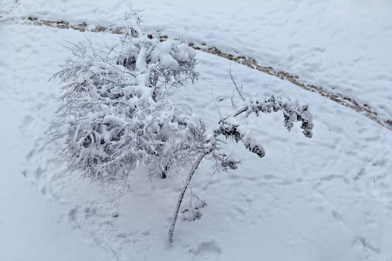 View of winter landscape and trees covered with big snow layer, nature cold. Tree branches in winter show. View of winter landscape and trees covered with big stock photos