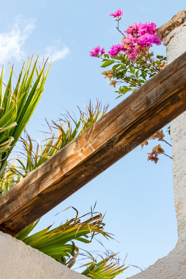 View of a wooden beam on a terrace with bougainvillea and palm tree on Boavista royalty free stock photography
