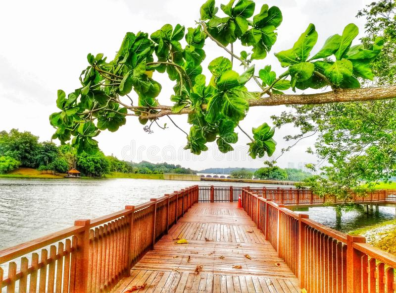 The view from wooden walking path at lakeside botanical garden royalty free stock photos