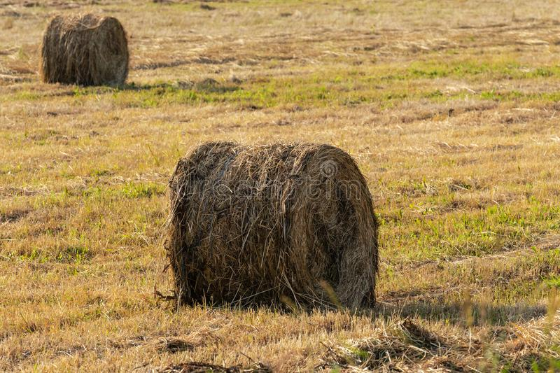 View of yellow hay rolls on mowed field, rural landscape on sunny day royalty free stock images