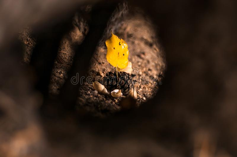 View of a yellow leaf through a hole in a tree royalty free stock photography