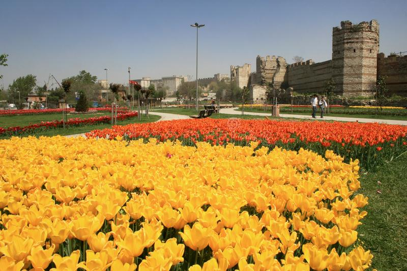A view of yellow tulips and orange tulips at the back, opposite of historical Topkapi City Walls, in Istanbul in spring time. A view of yellow tulips and orange royalty free stock photo
