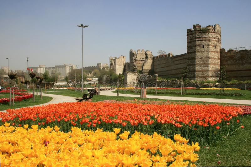 A view of yellow tulips and orange tulips at the back, opposite of historical Topkapi City Walls, in Istanbul in spring time. A view of yellow tulips and orange stock photos
