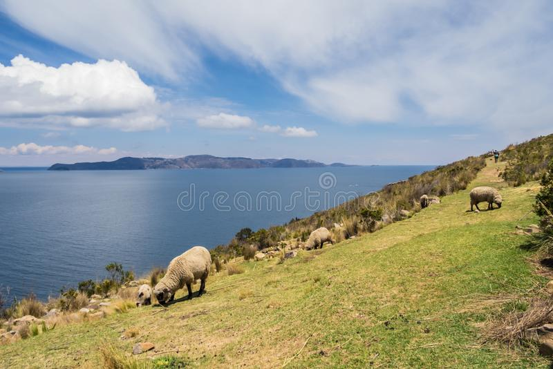 Viewof the Sun island fron the moon island in lake Titicaca. Bolivia. Sheeps eating grass stock photography