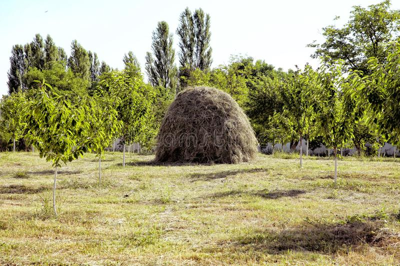 Viewpoint on a landscape of mount Bobija, hills, haystacks, meadows and colorful trees . Close-up of a single big haystack near. A large haystack on a green stock photo