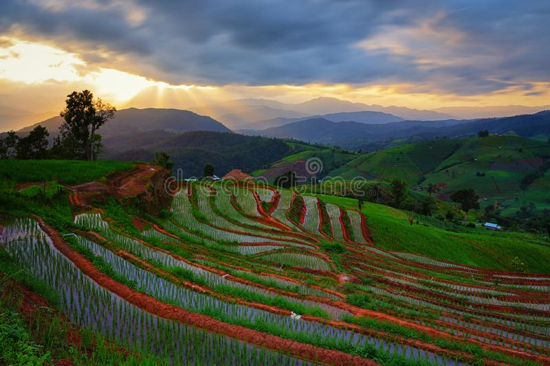 Viewpoint,Sunset,Terraced rice field in Pa Pong Pieng,Mae Chaem,Chiang Mai,Thailand royalty free stock photography