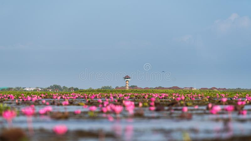 Viewpoint tower with lotus flowers at Thalenoi, Phatthalung Province. Thailand stock photos