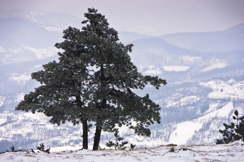 Viewpoint at winter landscape from mountain Kozomor stock images