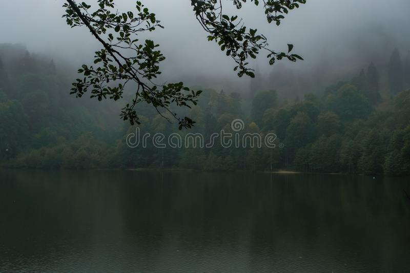 Forest in the mountain among fog in border of the lake stock photography
