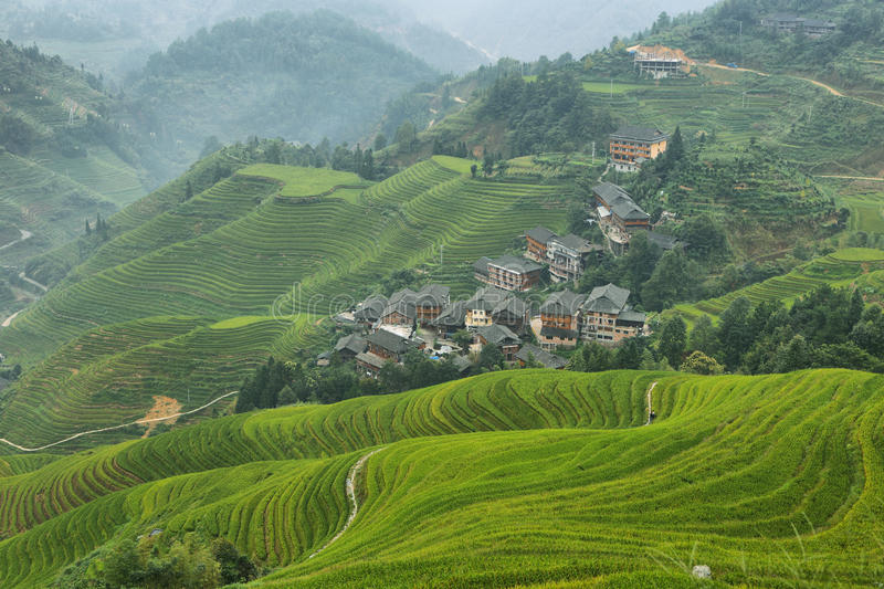 Views of green Longji terraced fields and Tiantouzhai village stock images