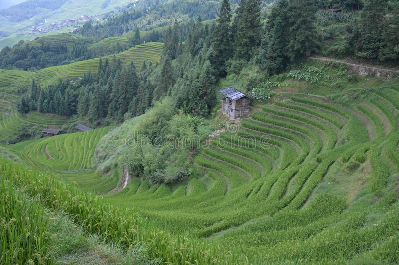 Views of green terraced fields, Dragon`s Backbone China stock images