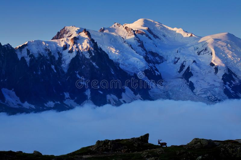 Views of the Mont Blanc glacier from Lac Blanc. Popular tourist attraction. Picturesque and gorgeous mountain scene. royalty free stock images