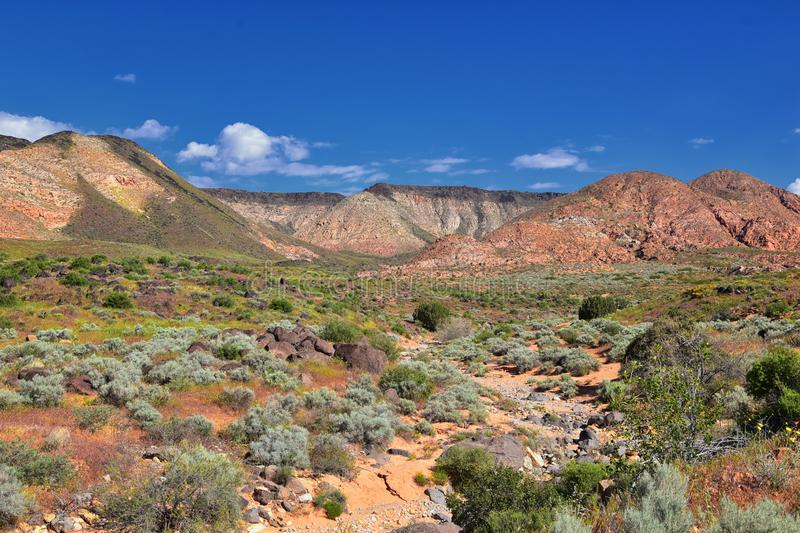Views of Red Mountain Wilderness and Snow Canyon State Park from the  Millcreek Trail and Washington Hollow by St George, Utah in. Spring bloom in desert stock images